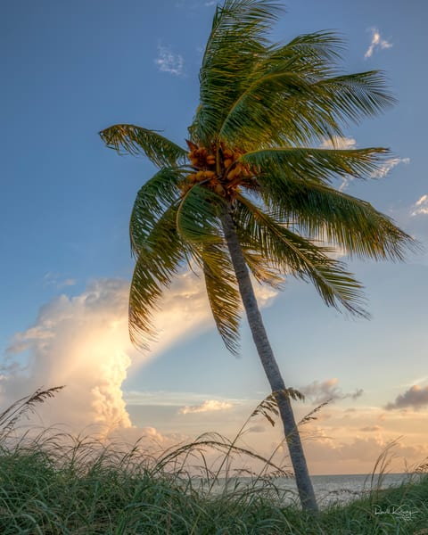 Coconut Storms
