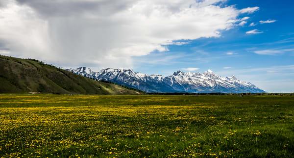 Wall Art Flowers In Grand Teton