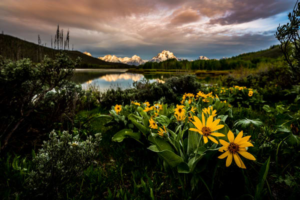 Photograph of Oxbow Bend Grand Teton National Park