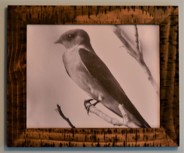Barn Swallow Framed Canvas | N2 the Woods Photography