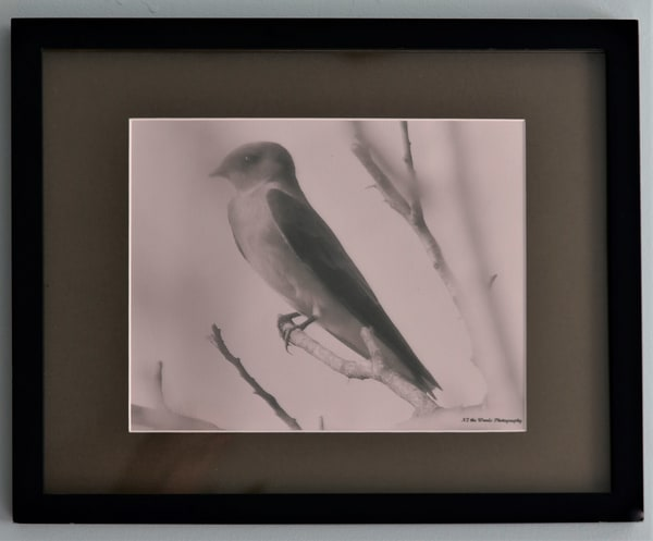 Barn Swallow Linen Framed Print | N2 the Woods Photography