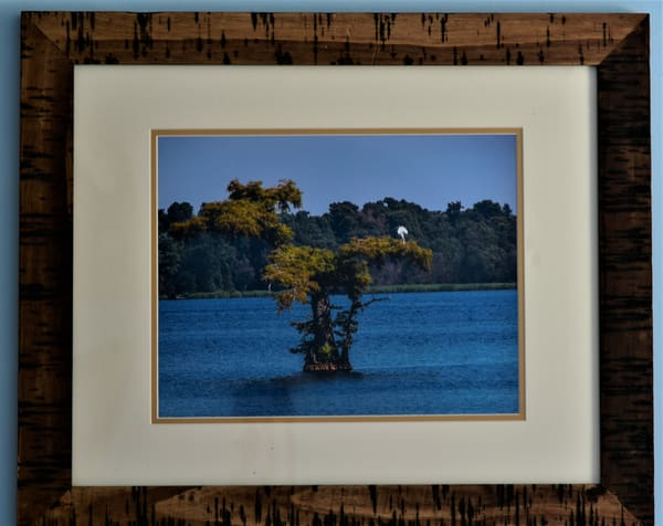 Cypress Island Framed Print | N2 the Woods Photography