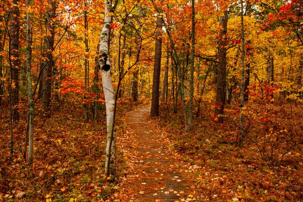 Majestic Autumn Path UP Fall