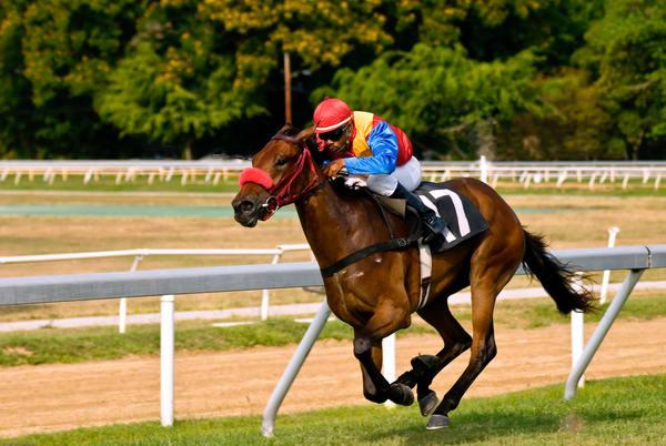 The Winning Horse