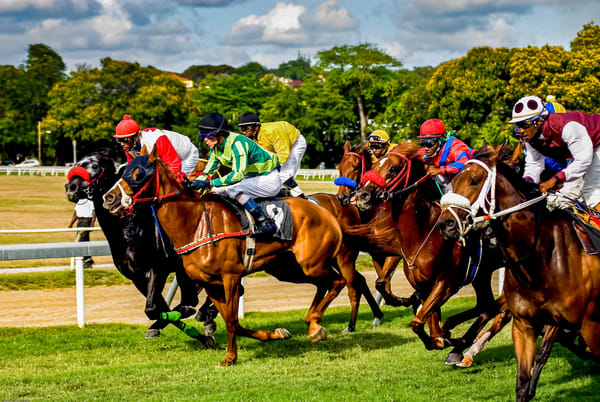 Barbados Horse Race Photography Art | Cardinal ArtWorks LLC