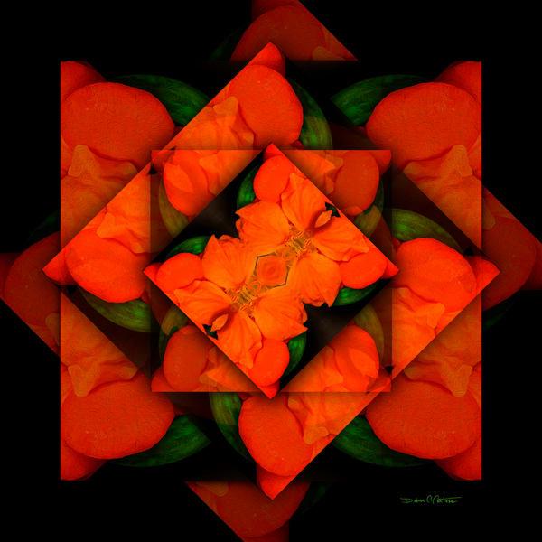Nasturtium Orange Blooms Abstracted- Art Deco