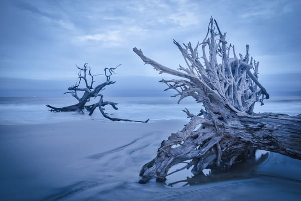 Soft Morning Light at Driftwood Beach | Susan J Photography
