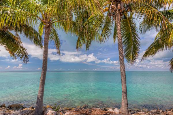Coconut Blues