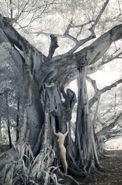 Banyon Woman Photography Art | nancyney