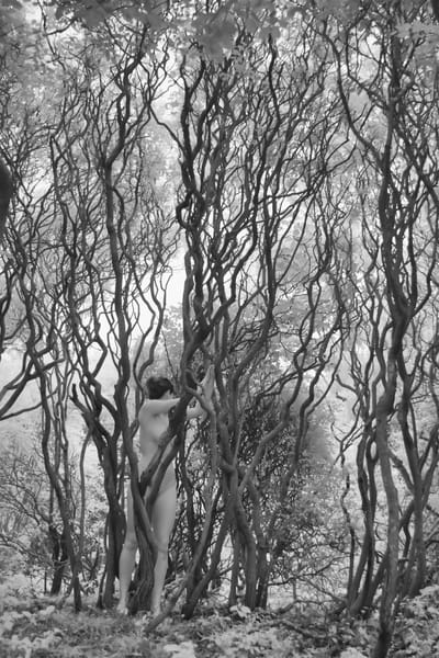 Thicket Photography Art | nancyney