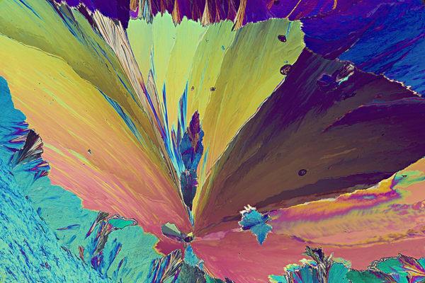 Sweet Floral (Vanillin Crystals) Art | Carol Roullard Art