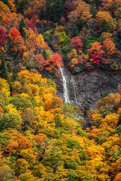 Autumn At Glassmine Falls Art | Red Rock Photography