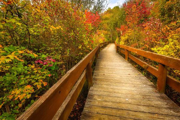 Autumn Wonderland Photography Art   Teaga Photo