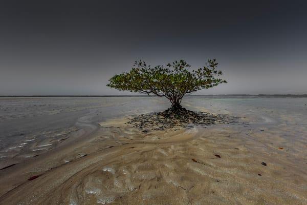 Paradise Tree Art | Moshe Volcovich