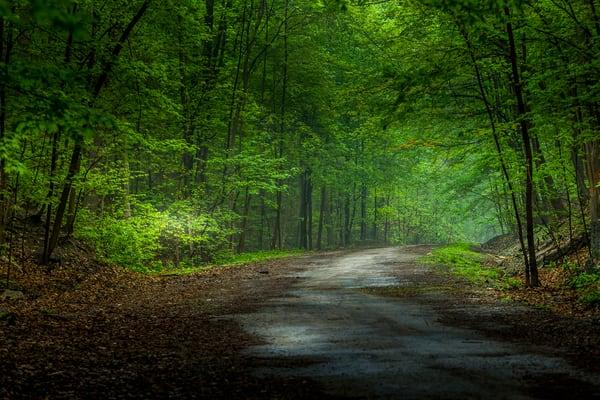Trust Of Nature Art | Moshe Volcovich