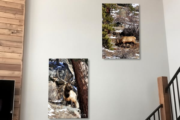 HANGING PRINT EXAMPLES