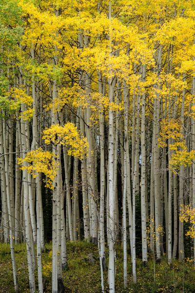 Fall Symphony Vertical Photography Art | Casey Chinn Photography LLC