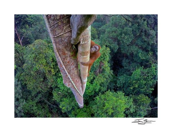 Wildlife Photographer of the Year Winning Image.