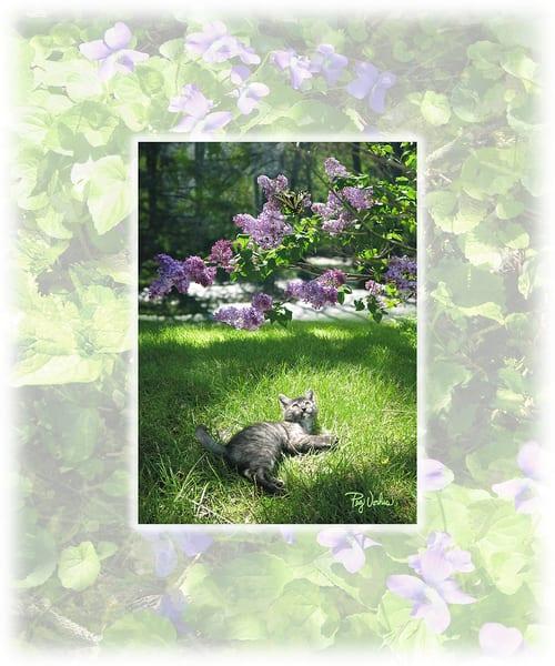 Spring Kitten Art | Cincy Artwork