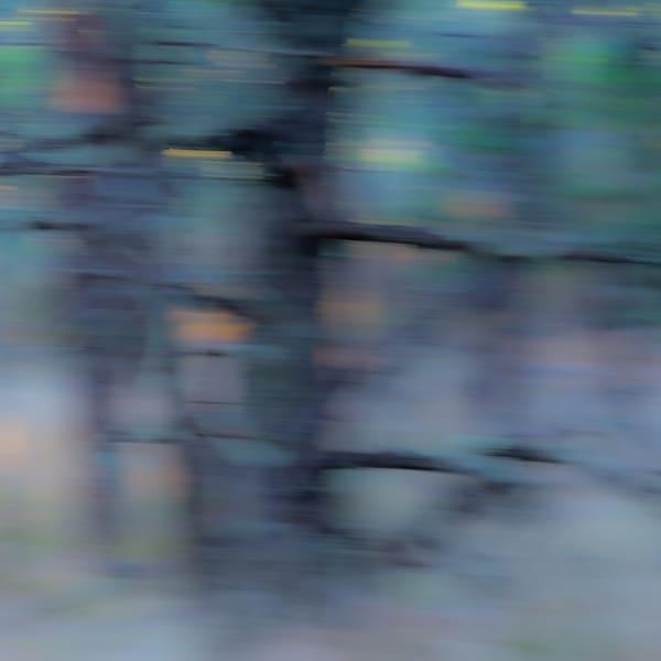 Woodland Impressions  1 Photography Art | Kim Bova Photography