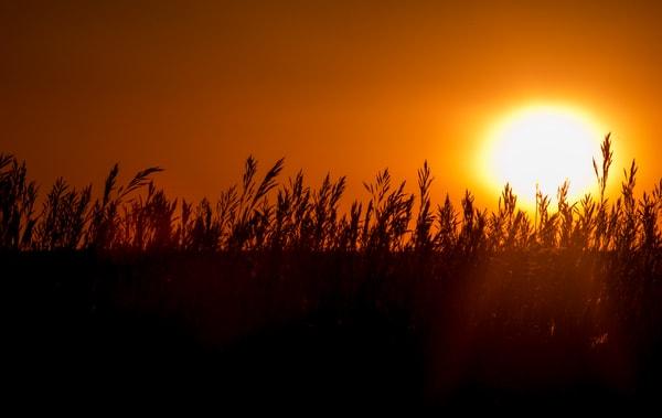 Sunrise Fields of Grass