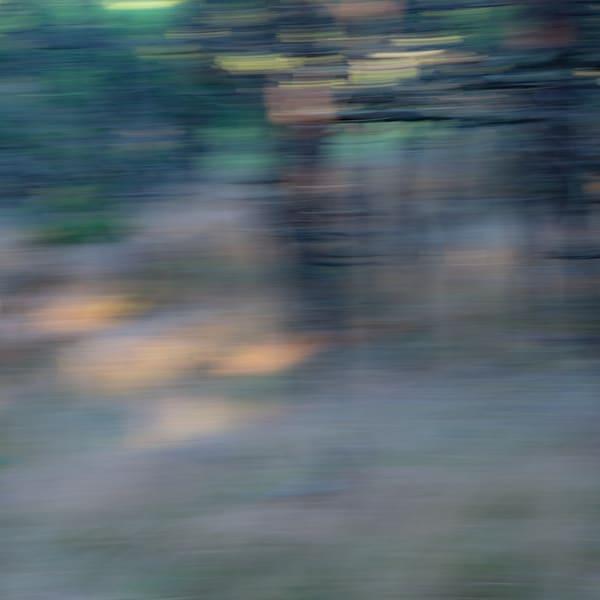 Woodland, intentional blur, impressionistic
