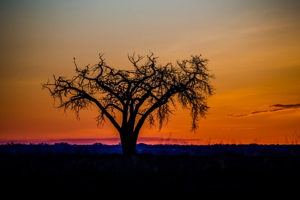 Photograph of Tree at Fossil Creek Reservoir Fort Collins Colorado