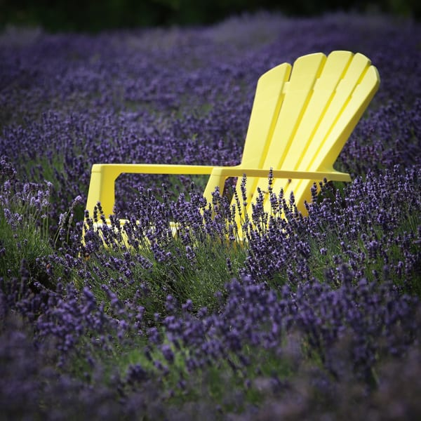 Yellow Chair Amid Scented Lavender Fields Photography Art | Julie Williams Fine Art Photography