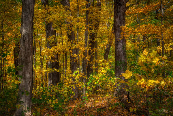 Autumn Trees, 2020