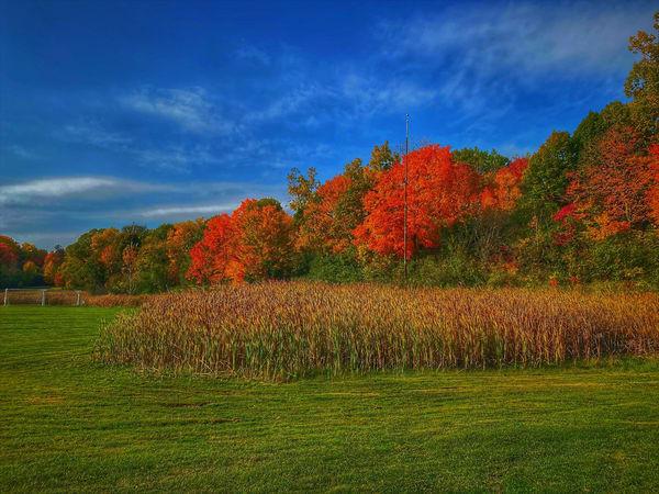 Hines Park 2 Art | DocSaundersPhotography