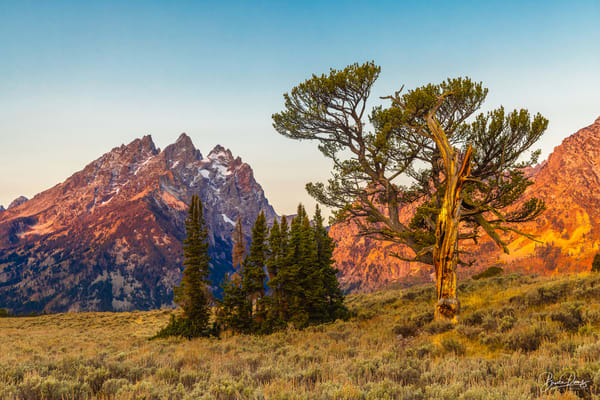 The Old Patriarch and the Teton Range