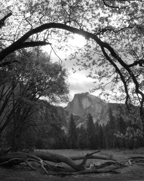 Half Dome From Cooks Meadow Photography Art | Greg Starnes Phtography