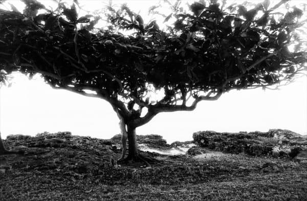 Large Tree Photography Art | nancyney