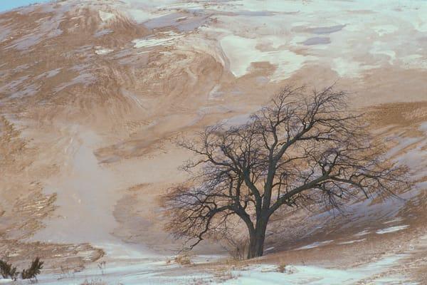 Tree, Sand and Dunes