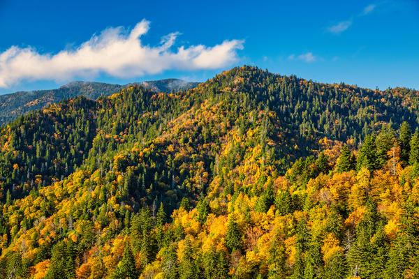 Golden Smokies - Smoky Mountains autumn fine-art photography prints