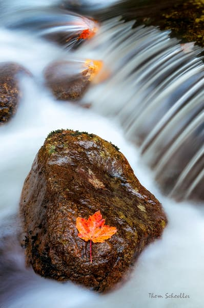 Luxury Fine Art Nature Details Photography prints for sale |  Fall Foliage on Wet River Rock