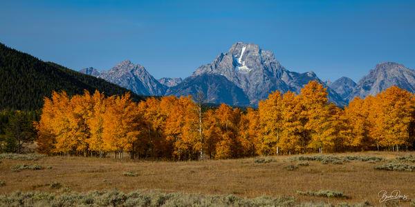 Mount Moran in Autumn