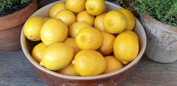 Bowl Of Lemons Photography Art | Julie Williams Fine Art Photography