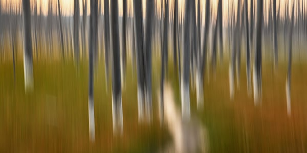 As From A Dream Impressionistic Photographs - Motion Blur - Fine Art Prints on Metal, Canvas, Paper & More By Kevin Odette Photography