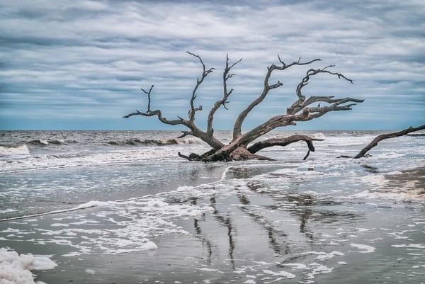 Driftwood Reflections | Susan J Photography
