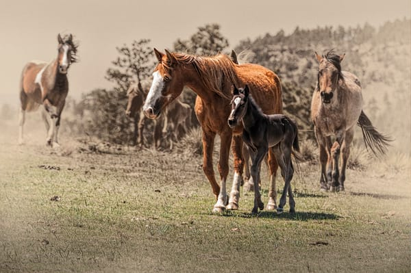 Tutelage of the Foal
