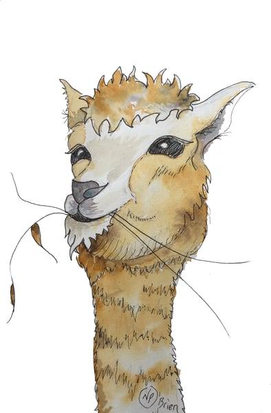 No Drama Llama  Art | Color Splash Ranch