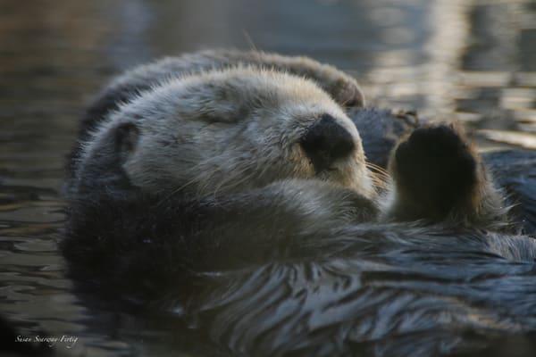 Sea Otter 6 Art | Susan Searway Art & Design
