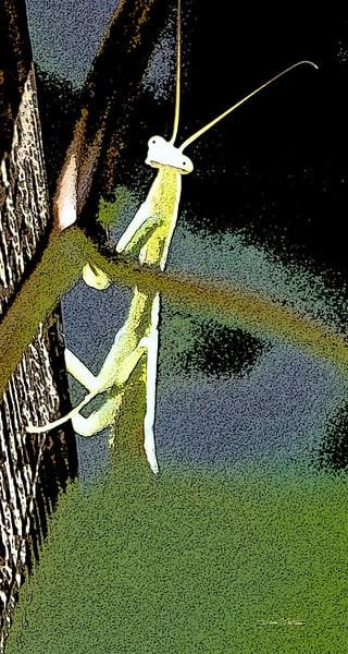 Praying Mantis on post PO