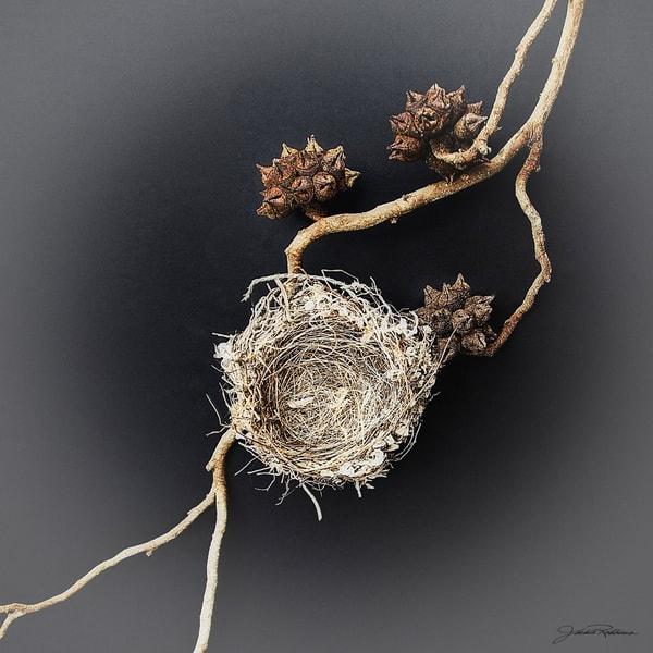 nest, birds, creativity, architecture, Nature, home, cradle, jackierobbinsstudio, photographicprints, buyartonline