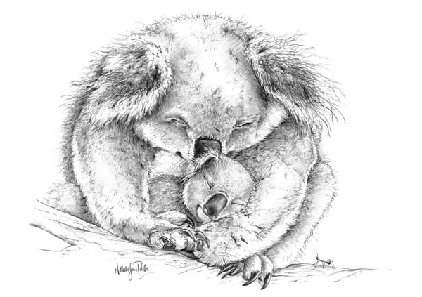 Content Cuddle  - Koala with Joey Pencil Drawing
