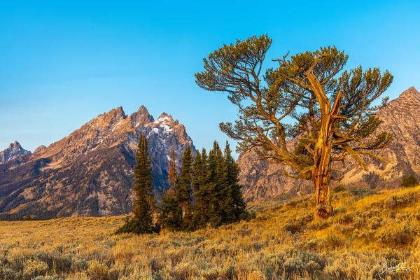 The Old Patriarch and the Teton Range III