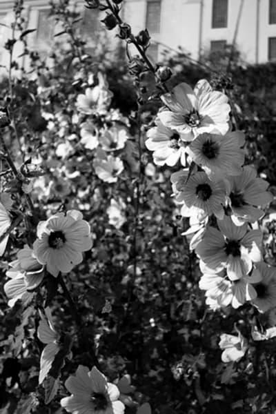 Alcatraz Flowers2 Photography Art | CLAUDIA LARRAIN
