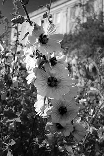 Alcatrazflowers  Photography Art | CLAUDIA LARRAIN