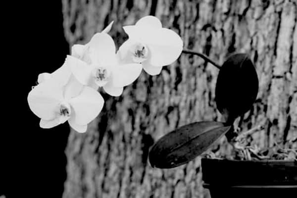 Orchid2 Photography Art | CLAUDIA LARRAIN